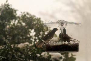 birdsinblizzard-34