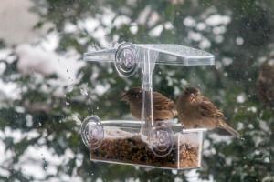 birdsinblizzard-49
