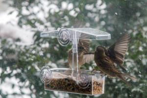 birdsinblizzard-59