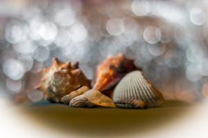 shells-7