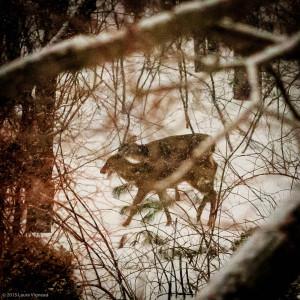 deer & snow-2