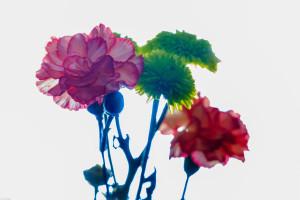 flowerbokeh
