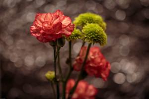 flowerbokeh-6