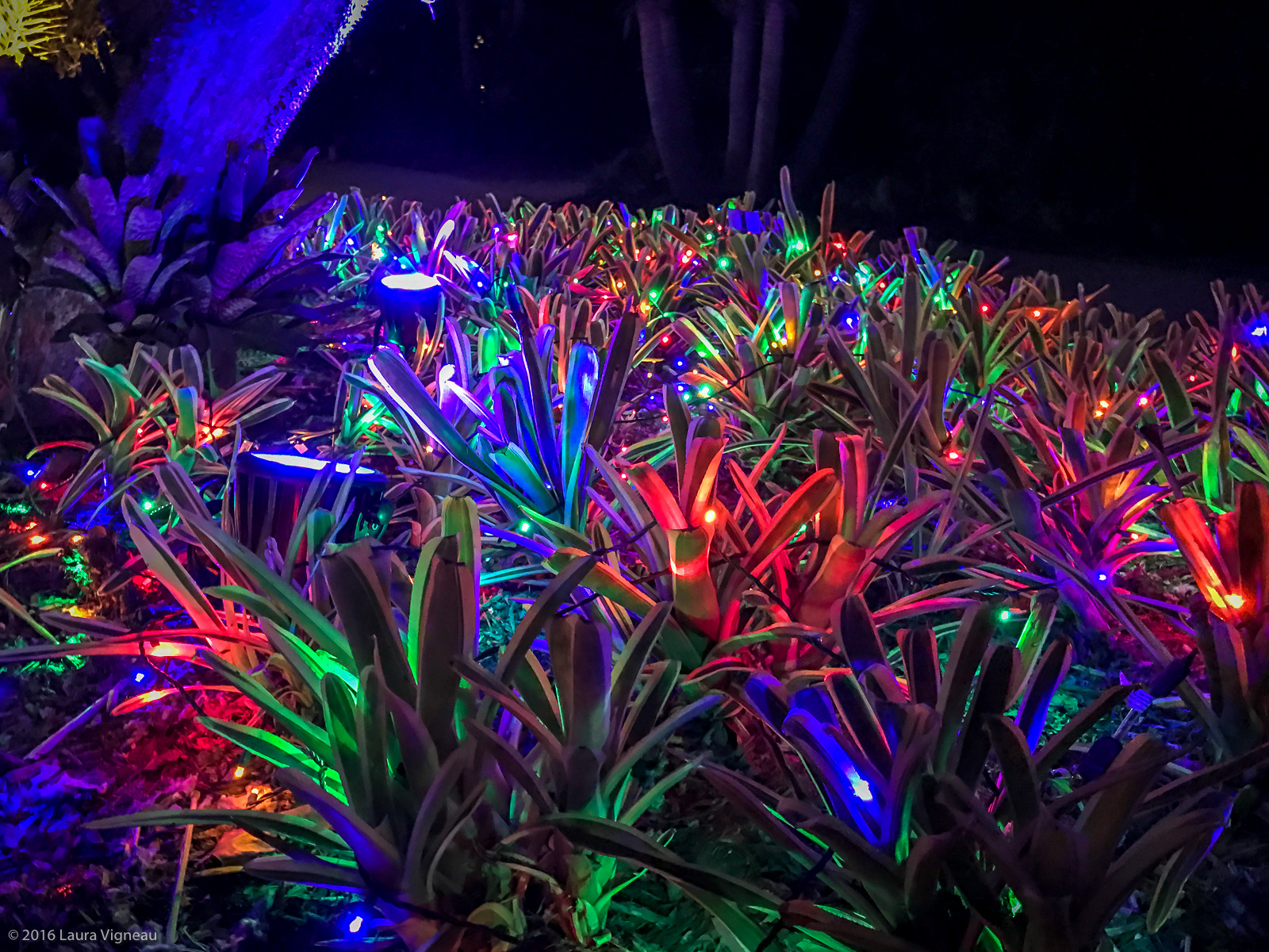 Naples Botanical Garden Light ShowNew England Area Bucket List