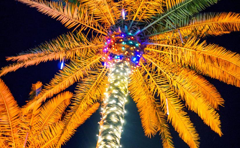 Naples Botanical Garden Light Show