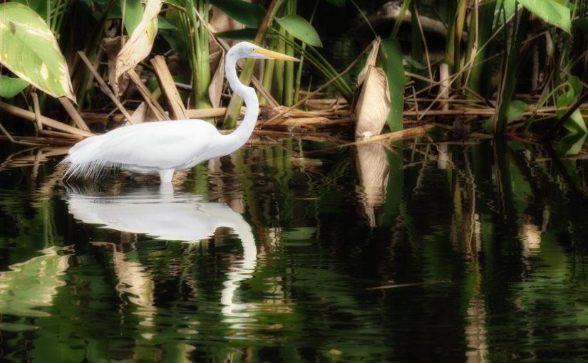 Fakahatchee Strand, The Everglades